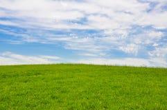 En stor och ren gr?smatta vid himmel arkivbilder