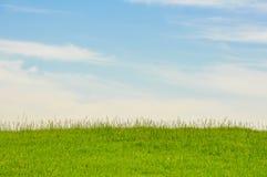 En stor och ren gr?smatta vid himmel arkivbild