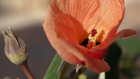 En stor röd blomma Fotografering för Bildbyråer