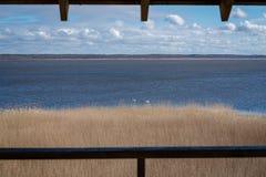 En stor sjö med många vita svanar arkivbild