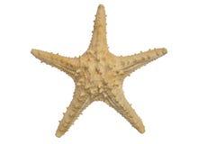 En stor sjöstjärna som isoleras på vit bakgrund Arkivfoto