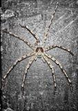 En stor spindel arkivbild