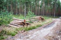 En stor stapel av trä i en skogväg Arkivfoton