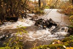 En stormig flod flödar till och med höstskogen royaltyfri bild