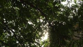 En stråle av solsken gör dess väg till och med den gröna lövverket av träden stock video