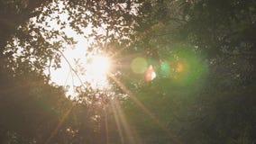 En stråle av solsken gör dess väg till och med träden i en stad parkerar lager videofilmer