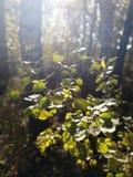 En stråle av solsken på nedgången lämnar någonstans i Oktober arkivbilder