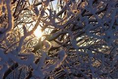 En stråle av solsken till och med filialerna som täckas med snö Arkivfoton
