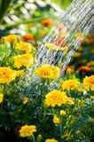 En ström av vatten häller på blomsterrabatt Arkivbild