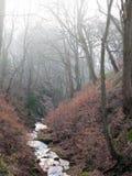 En ström som ändå flödar en brant dal med mist, täckte vinterträd, och mossigt vaggar royaltyfri foto