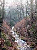 En ström som ändå flödar en brant dal med mist, täckte vinterträd, och mossigt vaggar royaltyfri bild