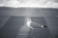 En strand är för honom. Royaltyfri Foto
