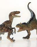 En strid mellan en Carnotaurus och en Velociraptor Royaltyfri Bild