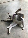 En strimmig kattkatt Arkivfoto