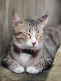 En strimmig kattkatt tar en ta sig en tupplur på golvet Arkivfoto