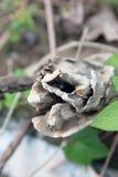En stubberöta Arkivfoto