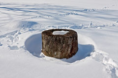 En stump i insnöat en solig eftermiddag Royaltyfria Foton