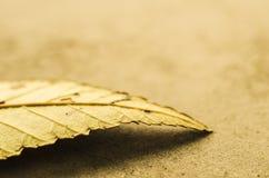 En stupad Leaf Arkivfoton