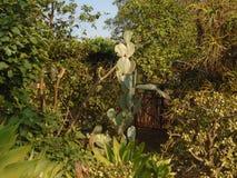 En suckulent kaktusväxt royaltyfria bilder