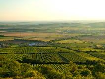 En sultry dag över vingård Royaltyfri Fotografi