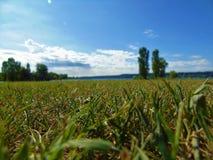 En Sunny Day For The Grass Royaltyfri Bild