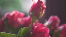 En sushi med laxen överst som får dopp många gånger med shoyusås långsam rörelse En bukett av rosa rosor för någon En gåva för lo
