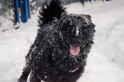 En svart hund i snön arkivbild
