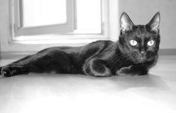 En svart katt ligger i ett tomt rum Ryska traditioner arkivbild
