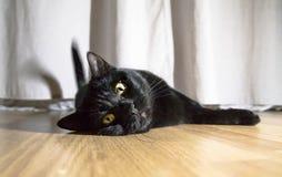 En svart katt ligger på golvet Närbild Arkivbild