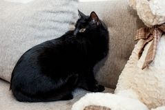 En svart katt med gula ögon sitter på en ljus soffa och ser tillbaka i bestörtning Mentala och emotionella problem av katter arkivfoton