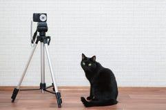 En svart katt sitter bredvid en tripod arkivbild
