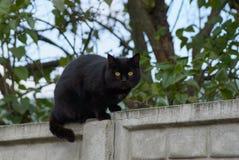 En svart katt sitter på ett konkret staket nära ett träd royaltyfri foto