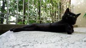 En svart katt som lägger på en sten arkivfilmer