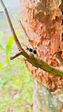En svart myra på filialmakroen royaltyfri foto