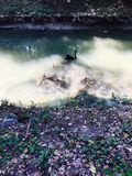 En svart svan och en cykel i floden arkivbild