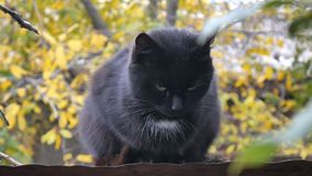 En svarta Cat Sitting på taket, Autumn Forest Seeking Prey i en Sunny Day