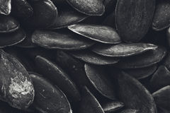 En svartvit bakgrundstexturbild av pumpafrö Arkivbilder