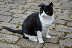 En svartvit katt Royaltyfria Bilder