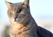 En synad kattnärbild royaltyfri foto