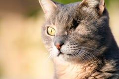 En synad kattnärbild royaltyfria foton