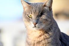 En synad kattnärbild arkivbilder