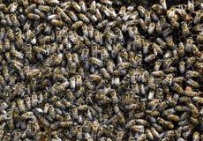 En tät klunga av svärmar av bin i de funktionsdugliga bina, surren och livmodern för rede i en svärm av bin biet detailed honung  Arkivbild