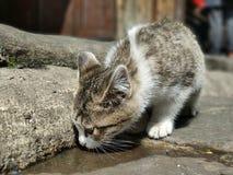 En törstig katt, ser det som det var en barndom arkivbild