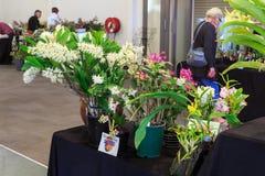 En tabell av bända vinnande orkidér på en orkidéshow royaltyfri foto