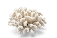 En taggiga vita dekorativa Coral Over en vit bakgrund Arkivbild