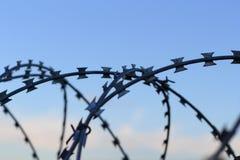 En taggtråd Royaltyfri Foto