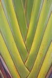 En taköverkant av en thailändsk stiltempel Arkivfoto