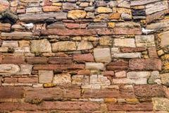 En tegelstenvägg med två duvor som vänder mot sig royaltyfri bild