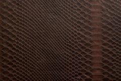 En textur som består av bruna celler som är liknande till huden av en sn Fotografering för Bildbyråer