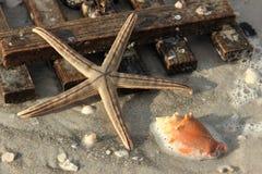 En tierra lavados estrellas de mar y tablero de madera Imagen de archivo